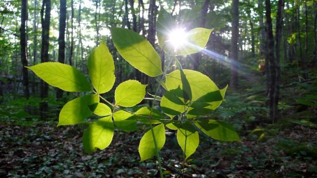 170-leaf-hug-sun